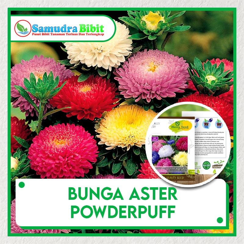 Benih Tanaman Bunga Aster Powderpuff